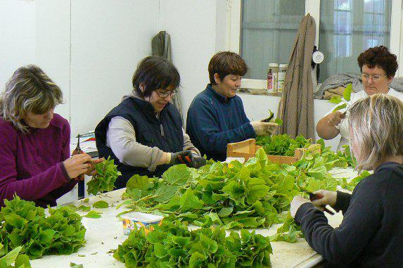 Employeurs agricoles : la FNSEA reconnue unique organisation représentative