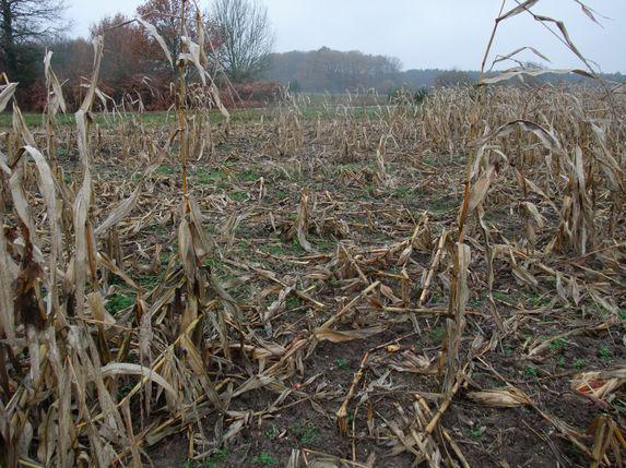 Dégâts de gibier : la double peine pour les agriculteurs
