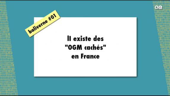OGM [vidéo] : 'il existe des 'OGM cachés' en France'