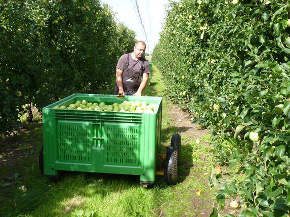 Emploi : prévisions d'embauches élevées dans le secteur agricole