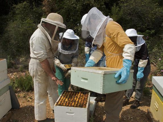 Polinov : vers des systèmes de cultures plus favorables aux abeilles