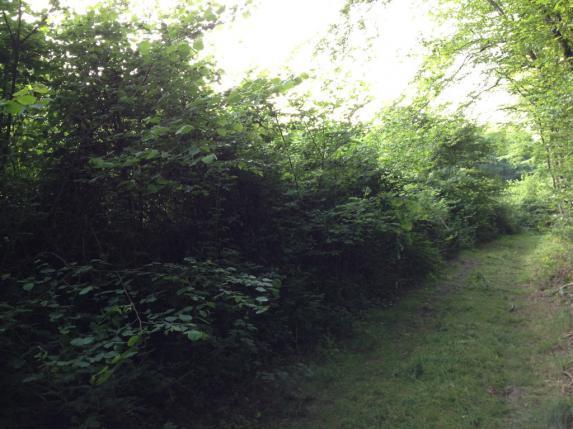 BCAE : maintien des haies, des arbres et bosquets