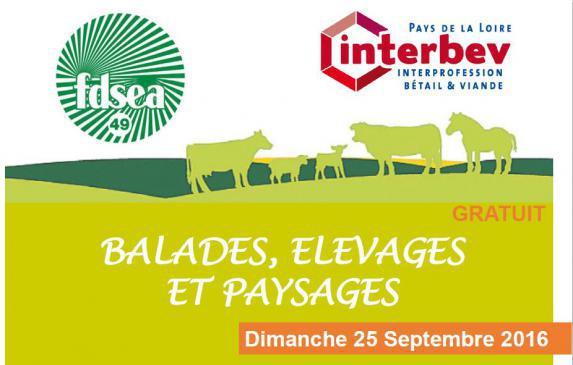 Balade, élevage et paysages à Chanzeaux